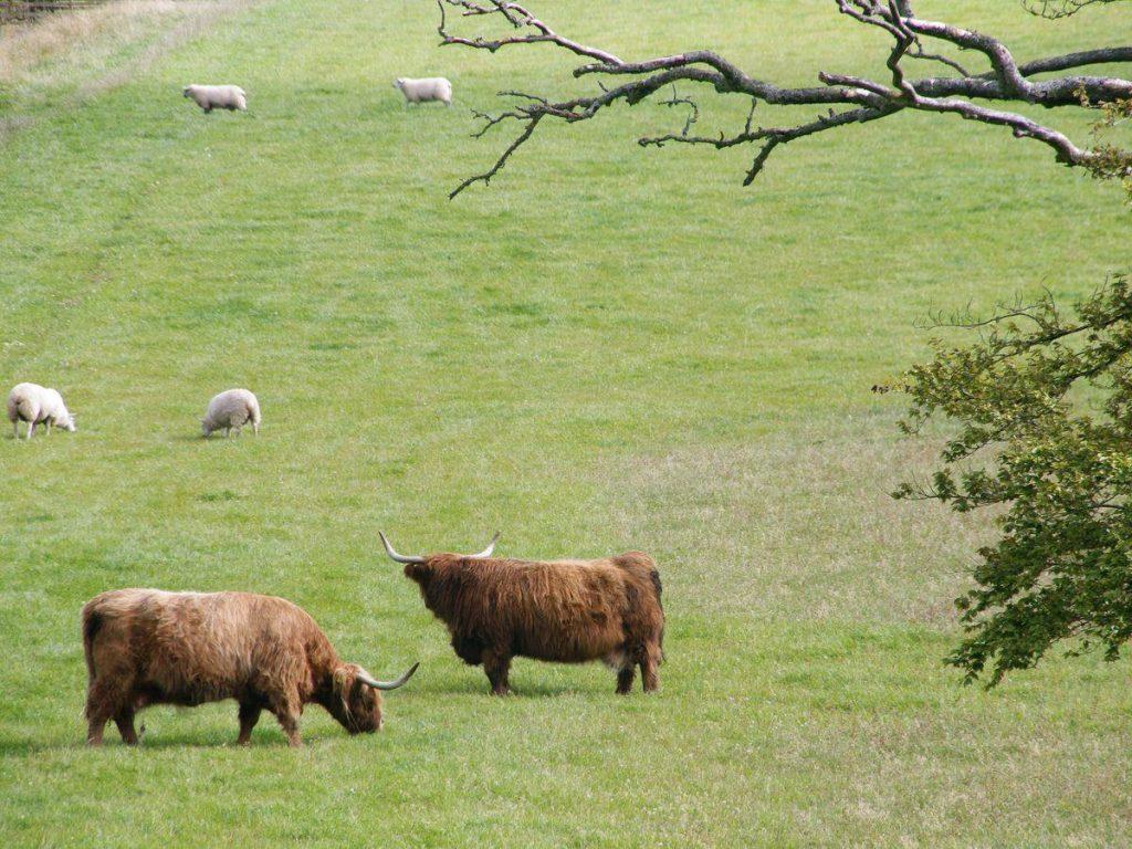 Around The Farm - Williamwood Farm